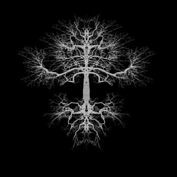 The Tree – Gustaf Broms and Limitations – Nanna Hallberg